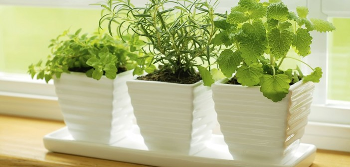 Ceramic Herb Pots on Windowsill