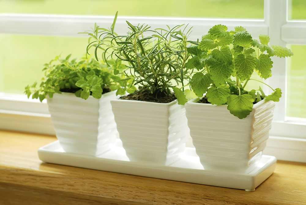 Ceramic Herb Pots on Windowsill
